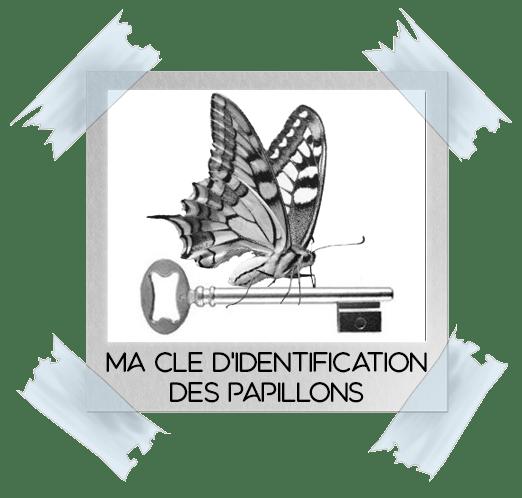 Comment reconnaitre les papillons de la Côte d'Opale et de l'audomarois ?