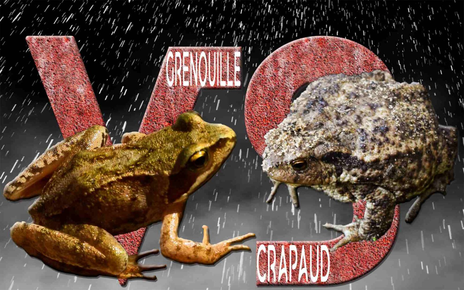 Différences entre un crapaud et une grenouille