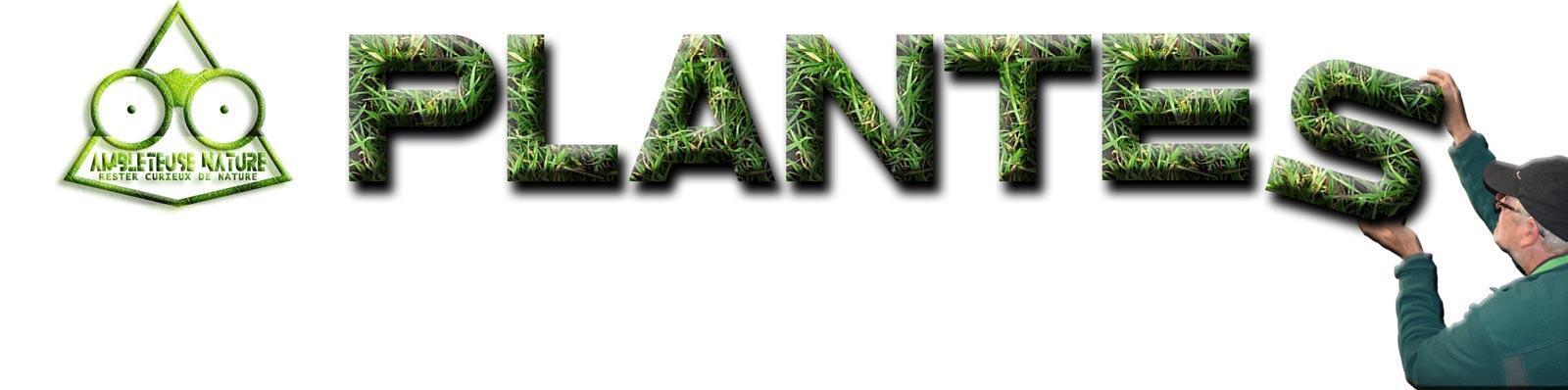 plante titre de la page
