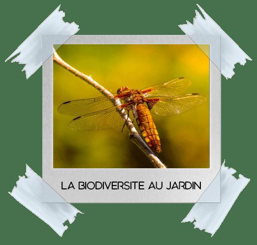 Mettez de la biodiversité dans votre jardin